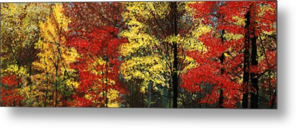 Fall Canopy Metal Print