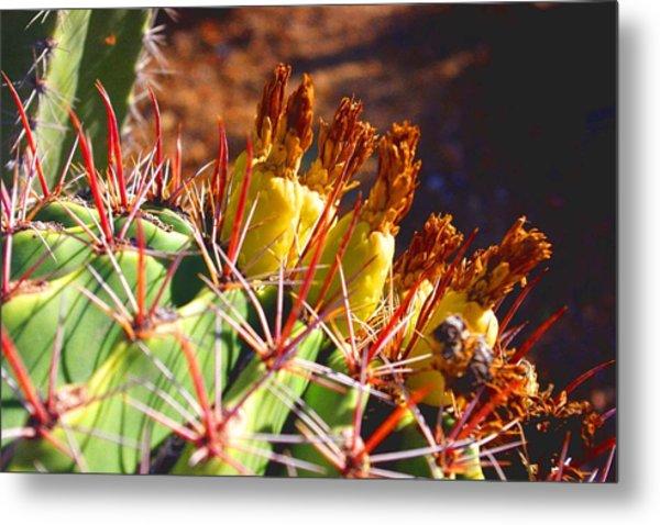 Fishhook Cactus Metal Print