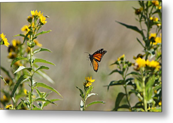 Flight Of The Monarch Metal Print