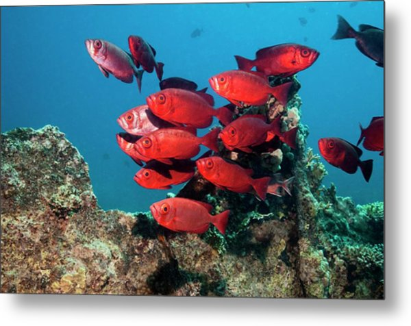 Goggle Eyes On A Reef Metal Print by Georgette Douwma