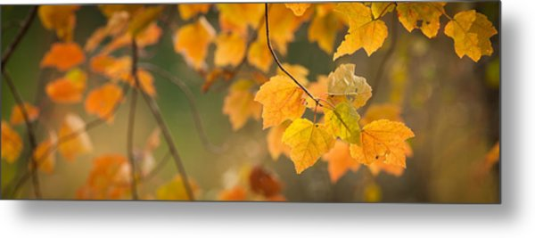 Golden Fall Leaves Metal Print
