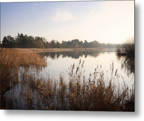 Golden Reeds Metal Print by Shirley Mitchell