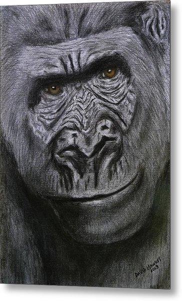 Gorilla Portrait Metal Print by David Hawkes