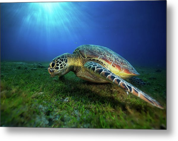 Green Turtle Metal Print by Barathieu Gabriel