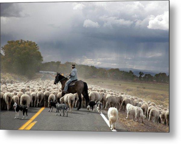 Herding Sheep Metal Print by Jim West