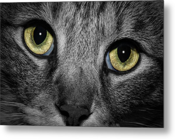 In A Cats Eye Metal Print