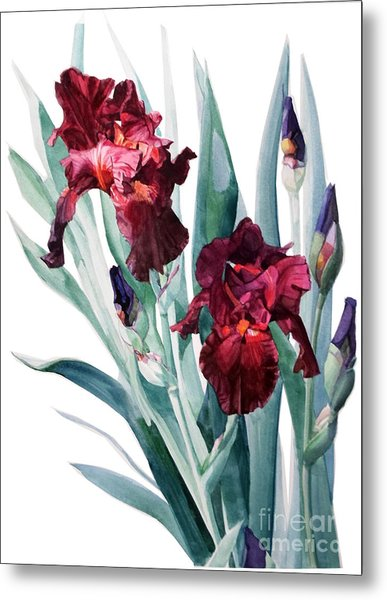 Dark Red Tall Bearded Iris Donatello Metal Print