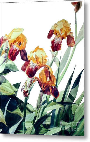 Watercolor Of Tall Bearded Irises I Call Iris La Vergine Degli Angeli Verdi Metal Print