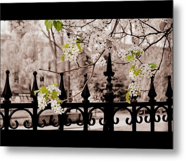 Joyce's Trees Metal Print by JAMART Photography
