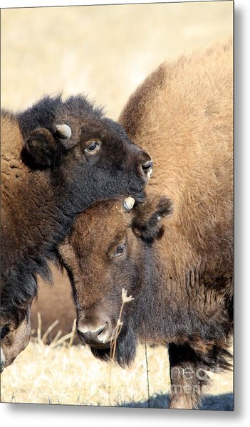 Lean On Me Metal Print by Rick Rauzi