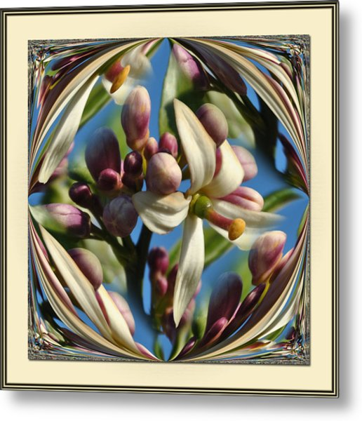 Lemon Tree Flower  Metal Print