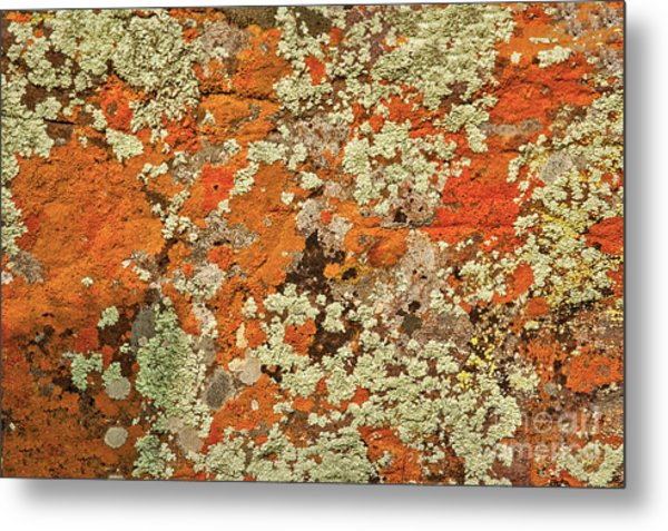 Metal Print featuring the photograph Lichen Abstract by Mae Wertz