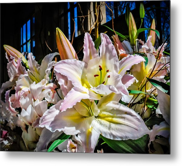 Lilies Out Of The Shadows Metal Print
