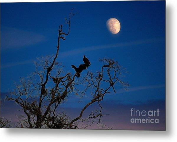 Moonrise Perch Metal Print