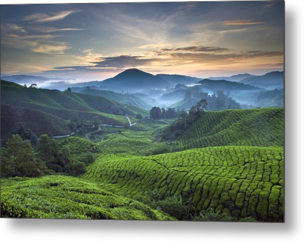 Morning At Cameron Highlands Metal Print