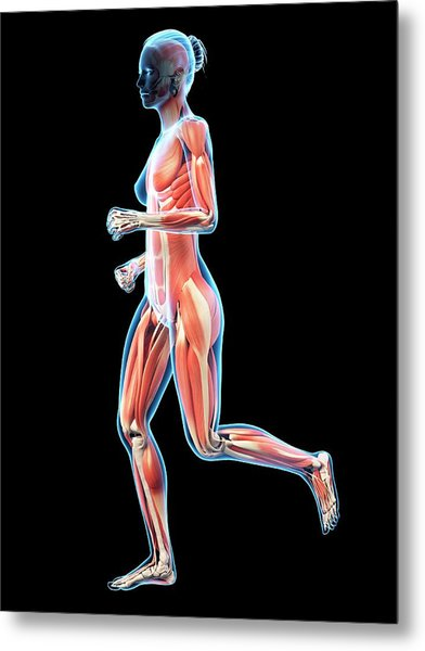 Muscular System Of Runner Metal Print