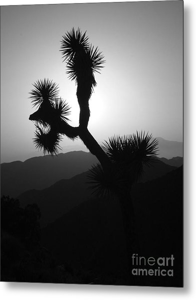 New Photographic Art Print For Sale Joshua Tree At Sunset Black And White Metal Print