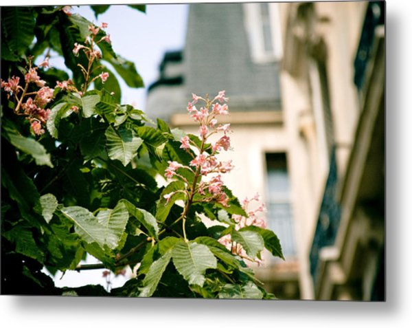 Paris The City Of Blossoming Chestnut Trees  Metal Print