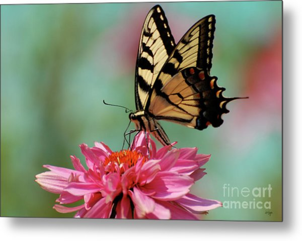 Metal Print featuring the photograph Pastel by Lois Bryan
