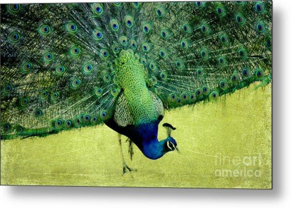 Peacock Plume Metal Print