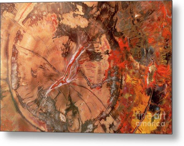 Petrified Wood Detail Metal Print