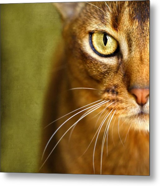 Portrait Of An Abyssinian Cat With Textures Metal Print