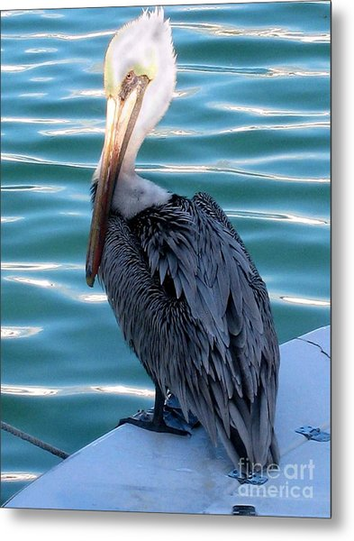 Precious Pelican Metal Print by Claudette Bujold-Poirier