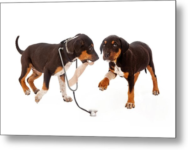 Puppy Veterinarian And Patient Metal Print
