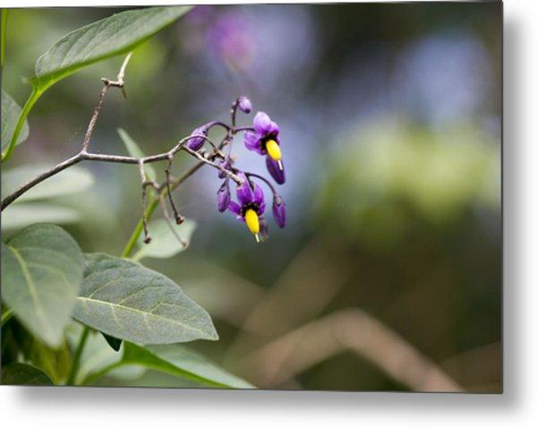 Purple Flower Metal Print