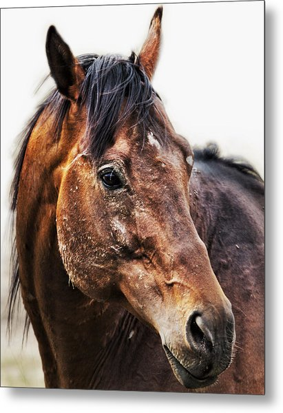 Metal Print featuring the photograph Resilience by Belinda Greb