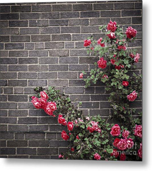 Roses On Brick Wall Metal Print