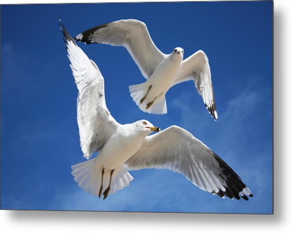 Seagulls In Love Metal Print