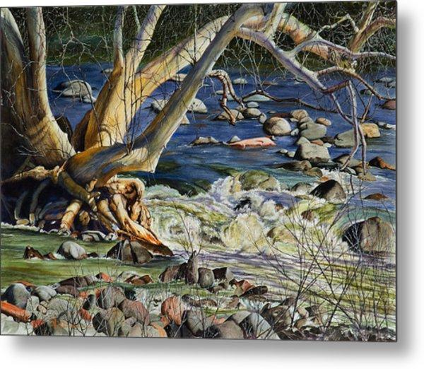 Sedona Dry Beaver Creek Sycamore Metal Print