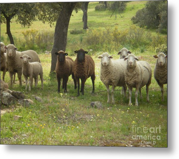 Sheep In Extremadura Metal Print