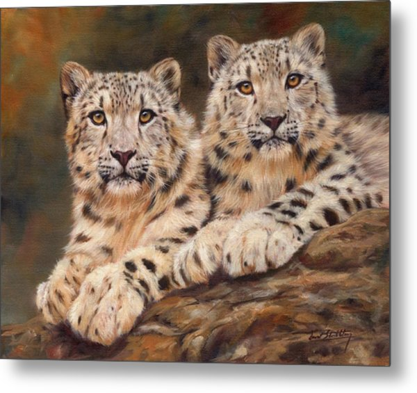 Snow Leopards Metal Print