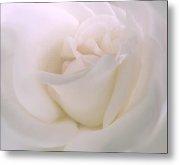 Softness Of A White Rose Flower Metal Print
