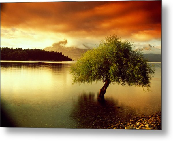 South Island New Zealand Metal Print