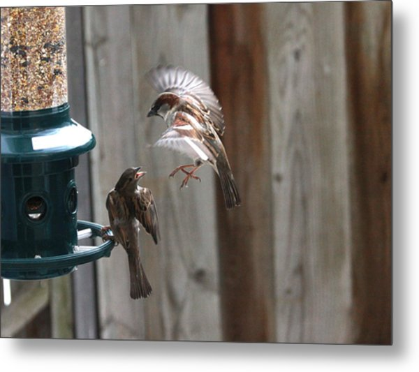 Sparrows Metal Print