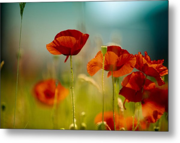 Summer Poppy Metal Print