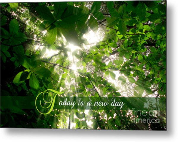 Sunlight Streaming Through Leaves Trees In A Forest Metal Print