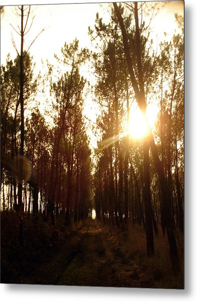 Sunrise Pin Tree Forest Metal Print by Michel Mata