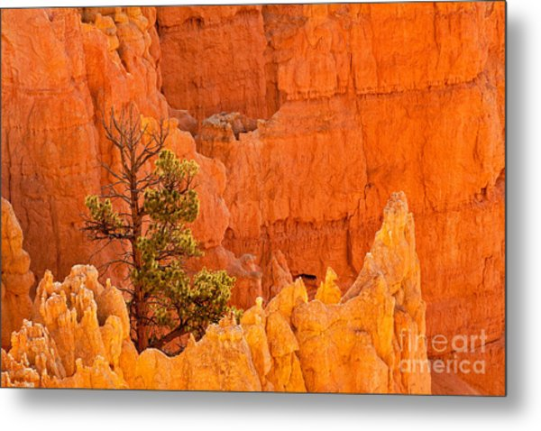 Sunset Point Bryce Canyon National Park Metal Print