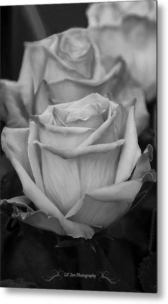 Tea Roses In Black And White Metal Print