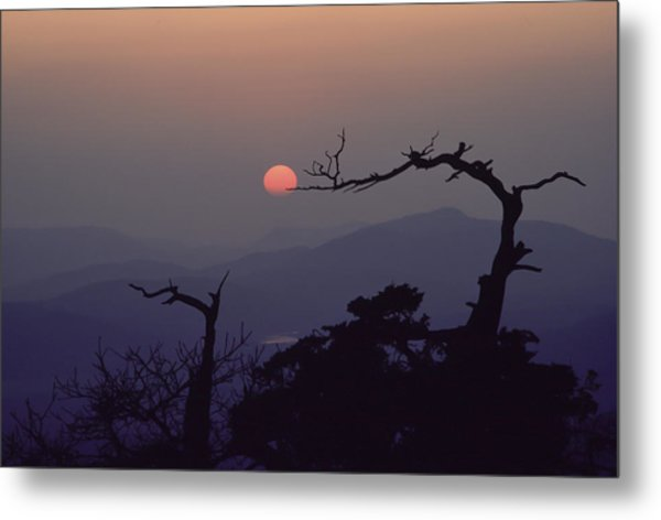 Tree And Sun From Mt Scott Metal Print