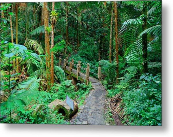 Tropical Rain Forest In San Juan Metal Print
