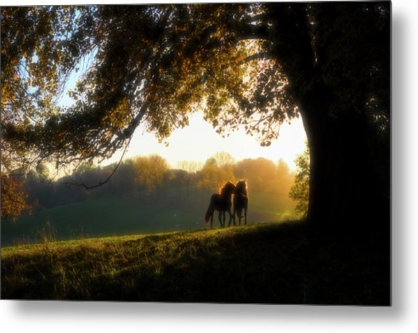 Two Horses At Sunset, Baden Metal Print