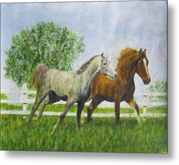 Two Horses Running By White Picket Fence Metal Print