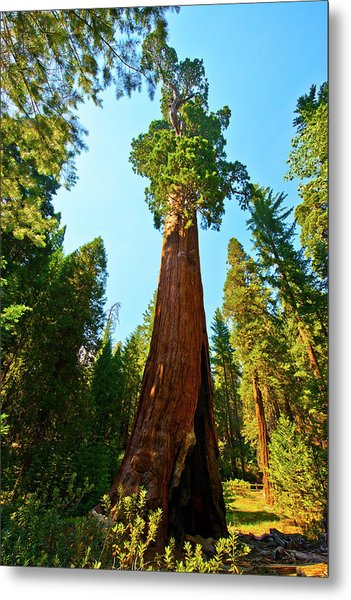 Usa, California, Sequoia, Kings Canyon Metal Print
