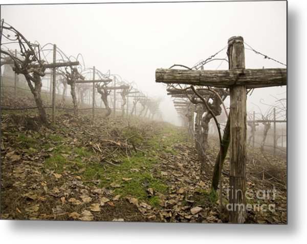 Vineyard In The Fog Metal Print