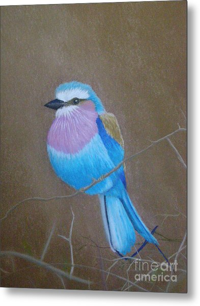 Violet-breasted Roller Bird Metal Print